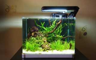 Маленький аквариум: требования к содержанию, виды небольших рыбок для резервуара объёмом 10 литров