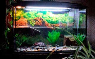 Акватеррариумы для красноухой черепахи: как обустроить, что нужно, оформление, грунт, вода, аквариум, растения, освещение, обогрев, вентиляция, декорирование, условия, что