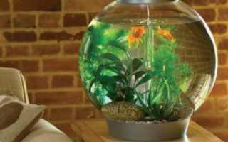 Круглый аквариум: оформление, уход, рыбки (каких можно держать), крышка, недостатки