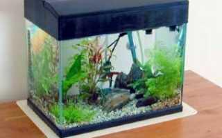 Аквариум 20 литров: сколько рыбок можно держать, оформление, кого поселить, каких рыбок, что нужно, оборудование, запуск