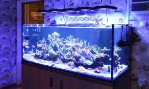 Аквариумные рыбки – содержание и уход по пунктам (как правильно ухаживать в аквариуме, краткая инструкция для начинающих): что нужно