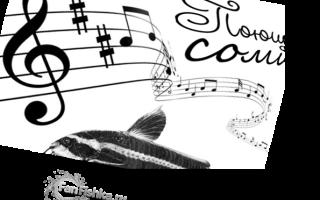 Платидорас полосатый (поющий сом): содержание, уход, размножение, совместимость, фото, кормление, половые различия, болезни, отзывы, цена