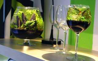 Аквариум-бокал: преимущества формы, виды рыбок для содержания и уход за сосудом