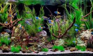 Грот для аквариума своими руками: из камней, из чего сделать, из кокоса, кальки, дерева, глины, стеклянной бутылки, покупка (корабль)