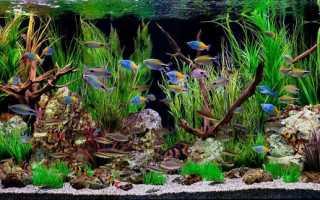 Аквариумный дизайн своими руками: фото, как правильно оформить, аквадизайн, красивое оформление корягами, камнями, растениями, идеи и варианты для небольшого