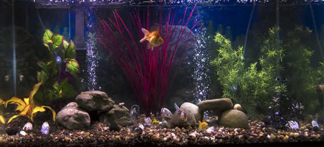 Сильная аэрация воды в аквариуме с растениями: особенности, способы и некоторые хитрости