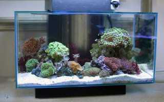 Как рассчитать объем аквариума в литрах: правила измерения, формулы для определения литража воды