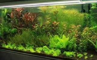 Неприхотливые аквариумные растения для аквариума (самые нетребовательные к освещению и уходу, простые не требующие грунта): фото, зачем нужна растительность,