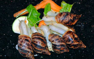 Что едят улитки (чем кормить) в домашних условиях: корм, питание (что кушают), что можно давать и нельзя