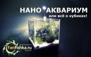 Нано аквариум: что это, рыбки, растения для маленьких аквариумов (10, 20, 30 литров), светильники